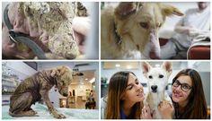 Por qué simplemente los animales puden ser tratados como seres vivos igual que nosotros.