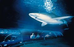 Best Things to Do in Auckland: Go Underwater at Kelly Tarltons Antarctic Encounter and Underwater World Places To Travel, Places To Visit, Honeymoon Places, New Zealand Travel, Underwater World, Auckland, Far Away, The Good Place, Things To Do