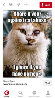 """I was against Cat Abuse the first time I posted this.- I'm STILL against Cat Abuse. In fact, I can't imagine NOT being against it. OP: """"I think that this cat is still cute. Animals And Pets, Funny Animals, Cute Animals, Baby Animals, Crazy Cat Lady, Crazy Cats, Photo Chat, Stop Animal Cruelty, Pets"""