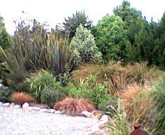 new zealand garden Hydrangea Bloom, Small Front Gardens, Christchurch New Zealand, Modern Garden Design, Modern Design, Shrub Roses, Backyard Landscaping, Landscaping Design, How To Level Ground