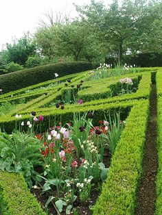 Asthall Manor, Asthall, Oxfordshire; glorious #hedges in a glorious #landscaping feat.