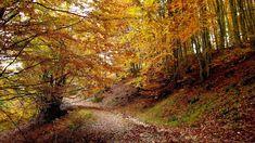 Paikos Mountain, Pella Mountain, Country Roads, Nature, Naturaleza, Nature Illustration, Scenery, Natural