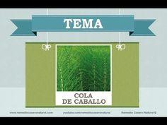 Beneficios, nutrientes y propiedades de la cola de caballo. Más información en: http://www.remediocaseronatural.com/comidas-sanas-beneficios-cola-de-caballo.htm