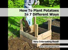 plant-potatoes-by-organicgardening-com