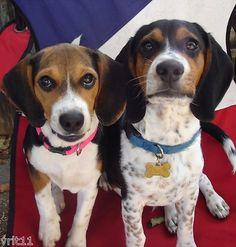 Underdog Lilly's Gourmet Peanut Butter Bacon Homemade Dog Snacks Treats Bones | eBay