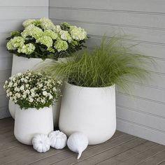 Hvite utepotter med hortensia, prydgress og frilandskrysantemum gir et delikat uttrykk på uteplassen Hvit frilandskrysanthemum er en holdbar og lettstelt plante som du har glede av langt utover høsten.