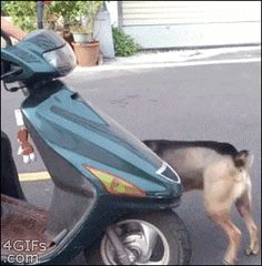 Now This is Precious When I hop on my scooter this is exactly what happens.…
