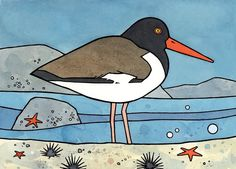 American Oystercatcher - Colorful Shoreline Illustration 5x7 by David Scheirer