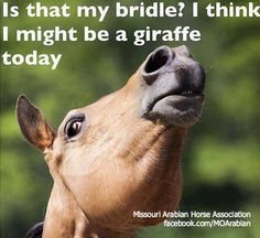 lol :D my old horse use to do this and I would have to stand on a chair because I was so short