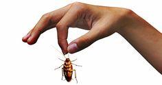 Gli scarafaggi possono rappresentare un gran problema, difficile da estinguere. Una volta entrati in casa, [Leggi Tutto...]
