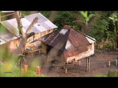 101 East - Where the wild coffee grows - YouTube