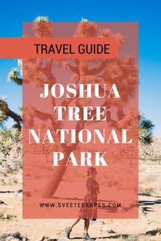 Joshua Tree National Park | Travel Guide