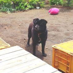 益子町の犬