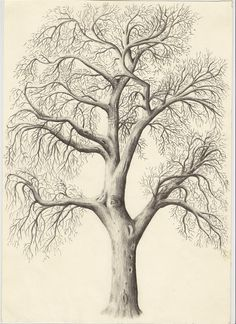 drawings of trees images | Title: Tree in Mellor - Description: Pencil drawing…