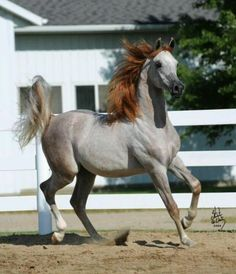 I like the way this horse is graying out.