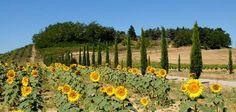 via daccesso a una delle strutture de La Mia Toscana con cipressi e girasoli