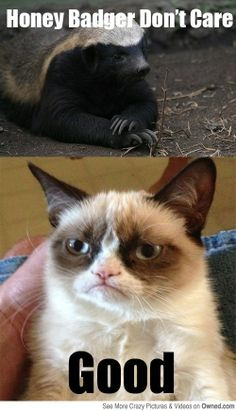 Grumpy Cat don't care either, honey badger