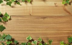 Download free ivy on wood wallpapers HD.
