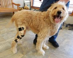 Dog Leg Brace ACL | Leg Braces For Dogs| Stifle Brace for Dogs | Conservative Management | Dog Hock Braces | MyPetsBrace.com