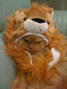 おこライオン丸