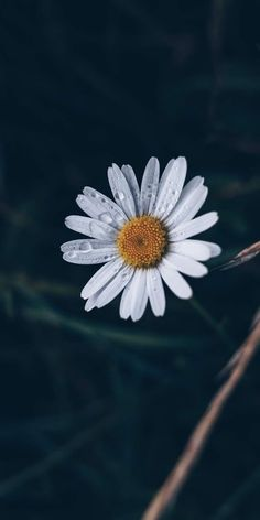 ideas vintage nature phography black and white hair for 2019 Daisy Wallpaper, Flower Iphone Wallpaper, Iphone Wallpaper Images, Flower Background Wallpaper, Sunflower Wallpaper, Cute Patterns Wallpaper, Cellphone Wallpaper, Plain Wallpaper, Fall Wallpaper