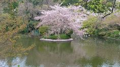 Merveilleux Japon