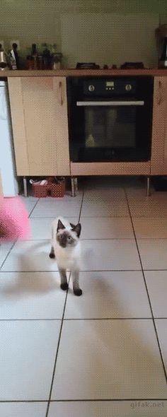 고양이의 놀라운 반응속도.gif