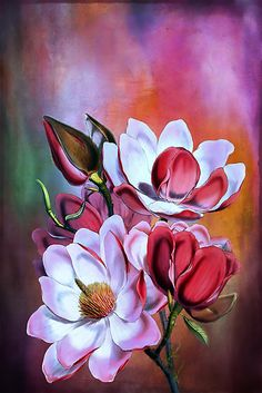 Magnolia by andy551
