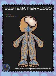 30 Mejores Imágenes De El Sistema Nervioso Sistema