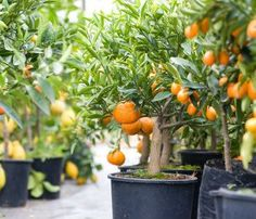 No Garden? Here Are 66 Edible Plants You Can Grow At Home In Containers