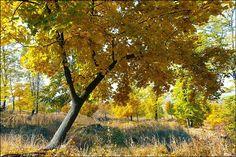 Golden autumne by StefanAndronache via http://ift.tt/2fs3lXq