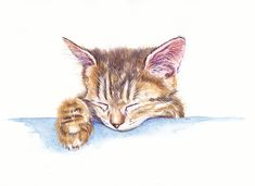 Kittens Cutest, Cats And Kittens, Kitten Drawing, Tiny Kitten, Happy Hippie, Animal Paintings, Cool Artwork, Cat Art, Colorful Backgrounds