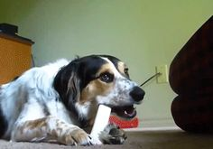 Vicious Attack - http://www.seethisordie.com/gifs/vicious-attack/ #gif #gifs #funny #humor #fun