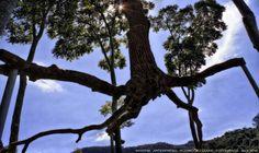 https://flic.kr/p/Hakc5s | INHOTIM . May 2016  19 | Inhotim, Museo y parque ecologico natural. Brumadinho, Minas Gerais. Fotografia: Artexpreso . Rodriguez Udias . *Photochrome Artwork Edition / BH, Brasil . May 2016 .. Website: rodudias.wix.com/artexpreso #Inhotim #artexpreso #photochrome #minasgerais #soubh