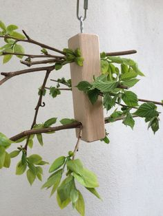 with toilet paper rolls?? Fresh branches