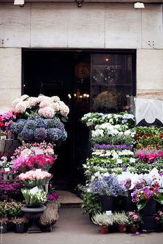 Parisian flower shop, photo by Carin Olsson - The flowers shops and markets there are fab! My Flower, Fresh Flowers, Beautiful Flowers, Glass Flowers, White Flowers, Flower Patch, Simple Flowers, Cactus E Suculentas, No Rain