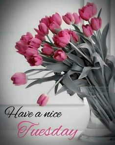 Good Morning Tuesday Wishes, Good Morning Cards, Good Morning Flowers, Morning Greetings Quotes, Good Morning Good Night, Good Morning Images, Good Morning Quotes, Happy Morning, Happy Day Quotes