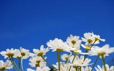 Fondos De Flores Para Email para Fondo de Pantalla En 4K HD Wallpapers 11