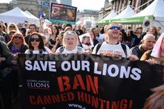 Animal Welfare Activists protest against 'Canned Hunting' of Lions ...
