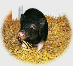 Secaucus Animal Shelter | Secaucus, NJ 07094