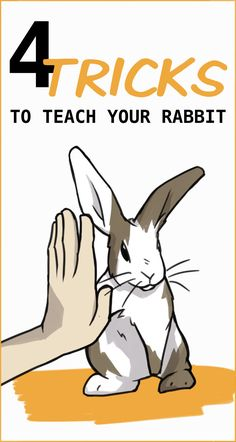 Rabbits are very intelligent pets, and they can be trained to perform so many cool tricks beautiful cutest funny wild basteln lustig zeichnen Rabbit Farm, Pet Rabbit, Rabbit Toys, Rabbit Treats, Dwarf Rabbit, Bunny Cages, Rabbit Cages, Indoor Rabbit Cage, Indoor Rabbit House