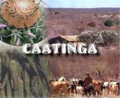 caatinga - MySearch