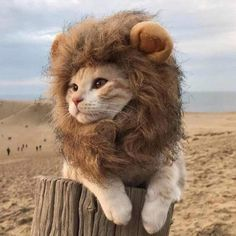 LionRoar - Lion Mane Headpiece for Cats & Dogs (25% OFF) - Small