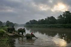 Elephants crossing, Thailand