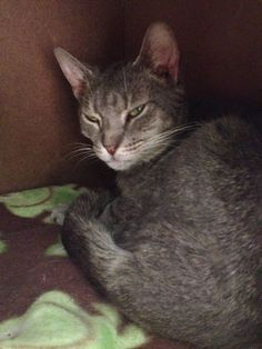 Silver - I have an amazing & beautiful coat with the personality to match!  ADOPT ME! http://www.animalkind.info/content/Adoption_Application/Adoption_Application