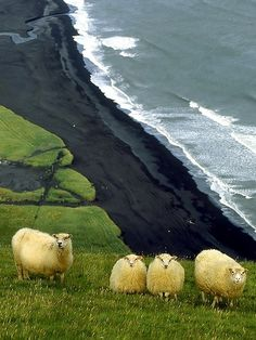 This Pin was discovered by Andy & Me. Discover (and save!) your own Pins on Pinterest. | See more about black sand beach, sand beach and iceland.