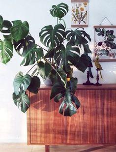 Τα 10 πιο ανθεκτικά φυτά για το σαλόνι! | exypnes-idees.gr