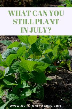 Fall Vegetables, Planting Vegetables, Growing Vegetables, Veggies, Growing Tomatoes, Veg Garden, Edible Garden, Garden Plants, Vegetable Gardening