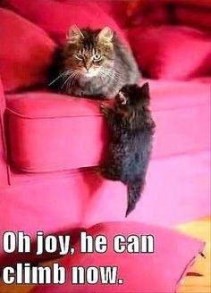 20 Funny Animal Memes - Funny Animal Quotes - - 20 Funny Animal Memes The post 20 Funny Animal Memes appeared first on Gag Dad. Cute Animal Memes, Funny Animal Quotes, Animal Jokes, Cute Funny Animals, Cute Baby Animals, Funny Cute, Super Funny, Wild Animals, Farm Animals