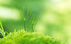 amazing green plant macro background